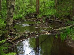 purouutinen